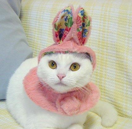 Easter_cat