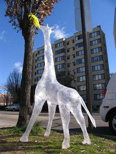 Scotch_tape_giraffe