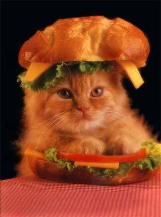 catwich