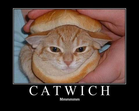 Catwich_2