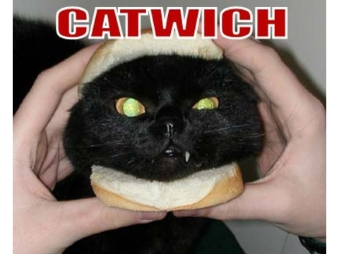 Catwich_2_2
