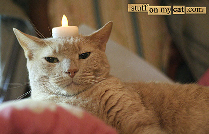 Catcandle