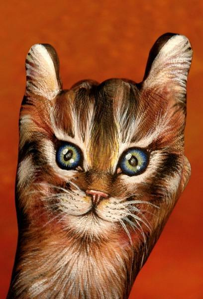 Fppetcat1