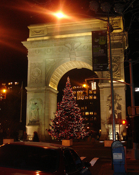 Washington_square_tree