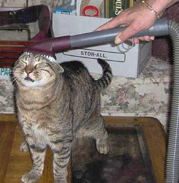 I Need A Vacuum That Is Good At Picking Up Cat Hair