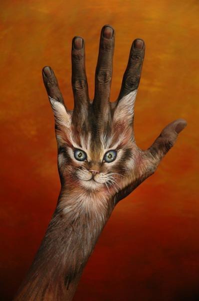 Fppetcat3_1