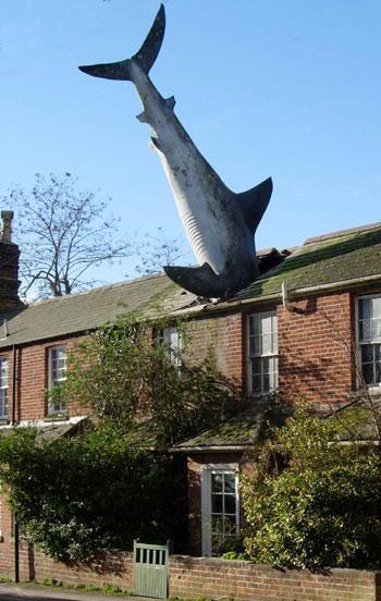 Land_shark