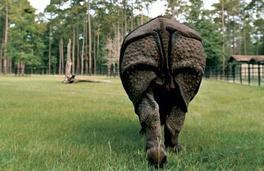 Rhino_butt