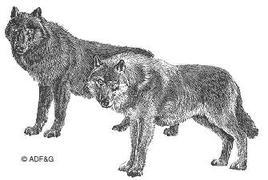 Wolf3_1
